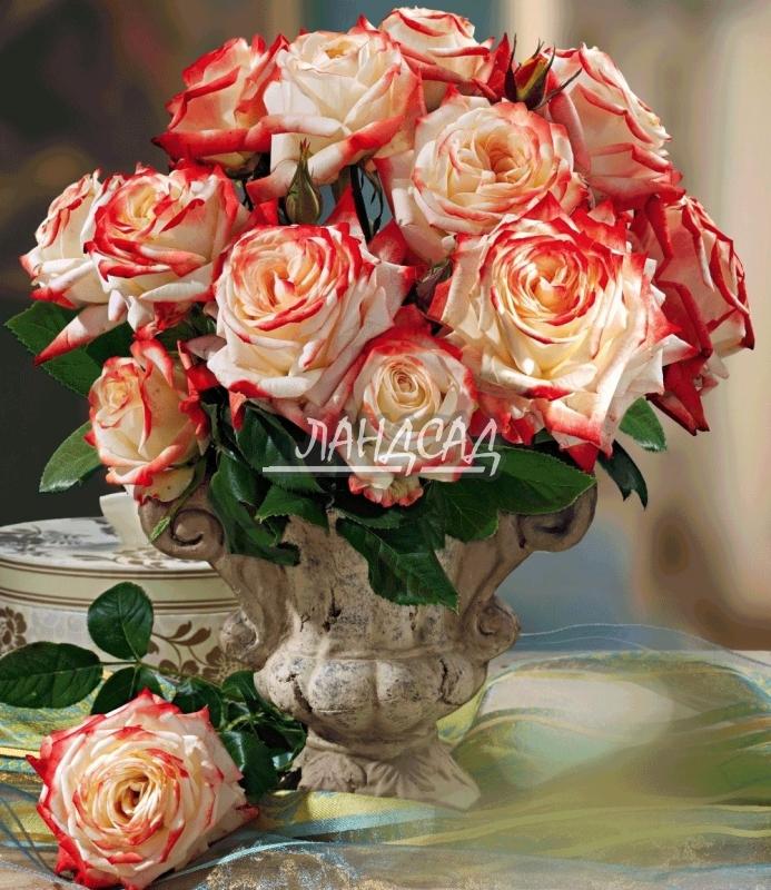 Роза императрица фарах купить